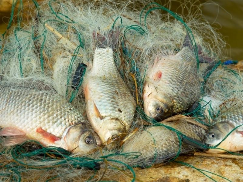 На рынке Голой Пристани полно браконьерских уловов