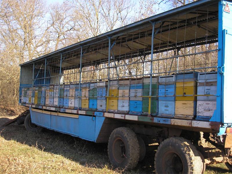 В акациевые леса Херсонщины отправились сотни мобильных пасек