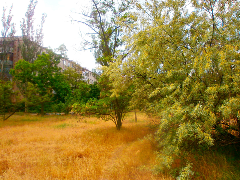 Осенняя весна Херсона