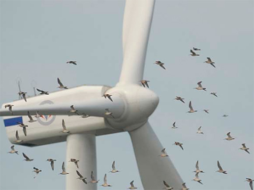 Уживутся ли на Херсонщине птицы с ветряками?