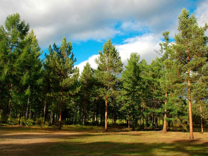 Лісове господарство Херсонщини матиме нового керівника