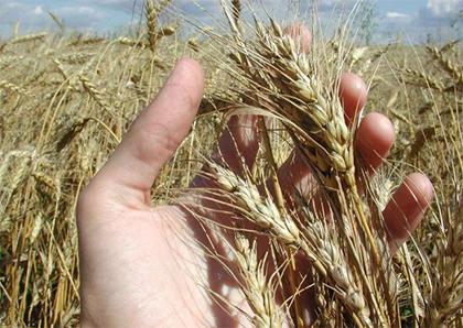 В Херсонской области заранее готовятся к уборке урожая ранних зерновых культур
