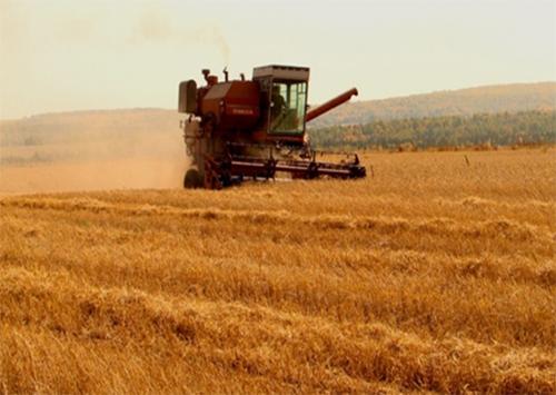 Хлібороби Херсонщини зібрали перший мільйон тонн зерна