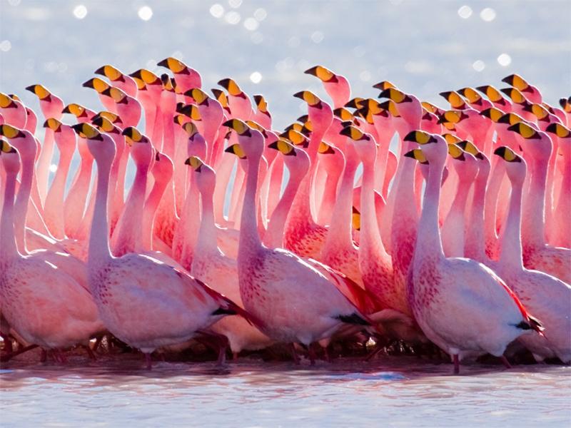 Розовые фламинго вернулись на Херсонщину