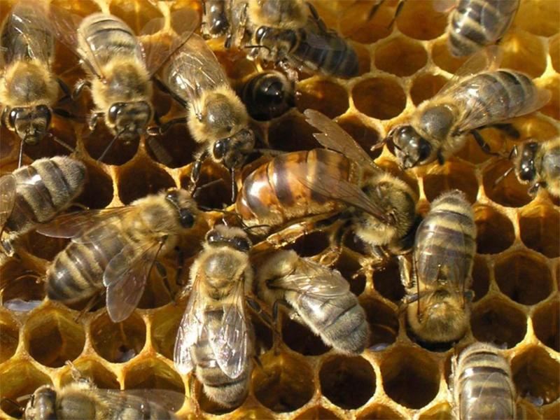 На Херсонщині бджолам несолодко. Пасічникам теж