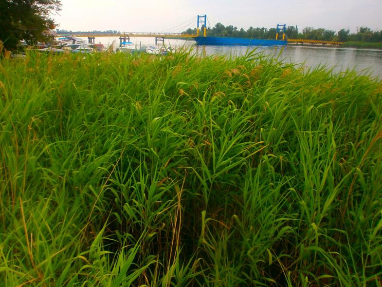 Дикая природа прибрежного Херсона