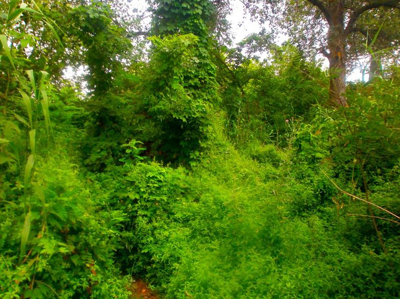 Фотограф нашел «заросли Амазонии» и «мангровые заросли бассейна реки Инд» в городской черте Херсона