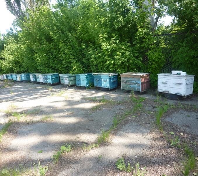 На Херсонщині з'явилися сторожові бджоли