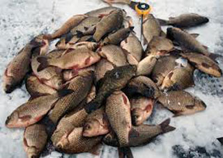 На Херсонщині борються з незаконним виловом риби