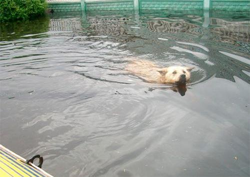 От паводка на Херсонщине гибнут животные