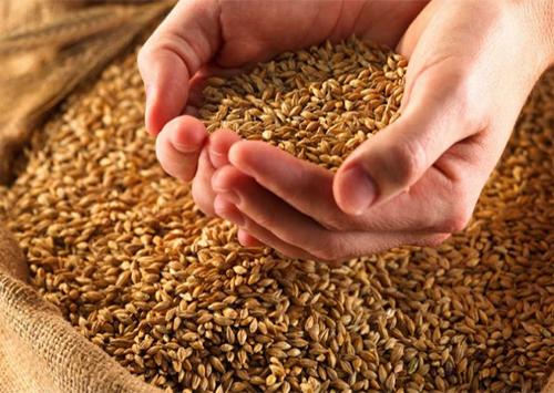Замість продовольчого зерна селяни Херсонщини зібрали фуражне