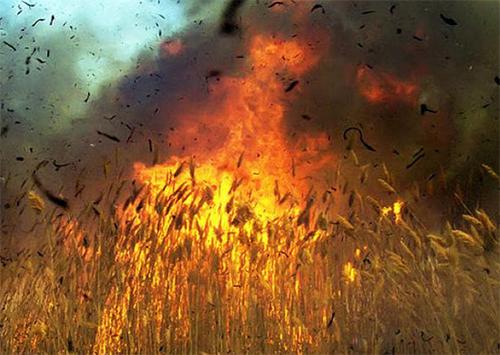 На Херсонщине сгорела хлебная нива
