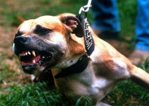 В Херсоне собака пыталась откусить голову ребенку