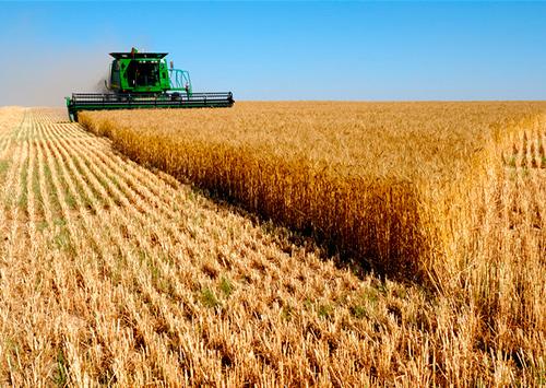 Чужий врожай, наче свій власний, злочинці збирають у степах Таврії