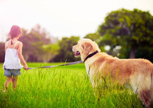 В Олешках міськрада гавкати собакам заборонила