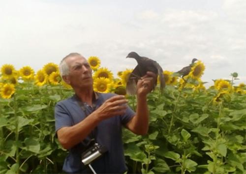 На Херсонщину завезли фазанов из Белой Церкви