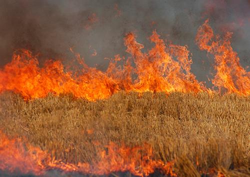 Сельчанин чудом выжил, спасая ниву от пожара