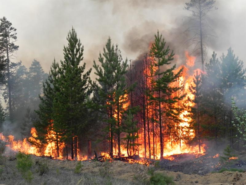 Лесные пожары на Херсонщине уже тушат с помощью авиации