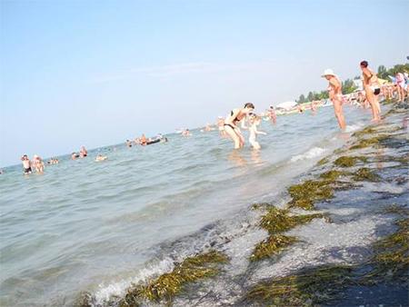 У пляжей Скадовска по-прежнему гуляет холерный вибрион