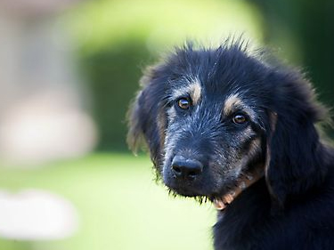 На Херсонщині садист отруїв собаку та цуценят