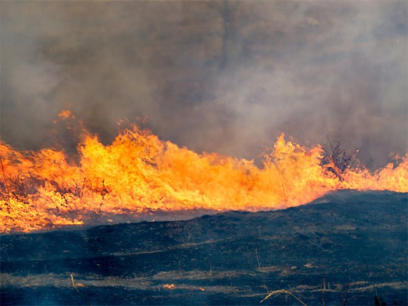 На Херсонщині заповіднику загрожують підпали