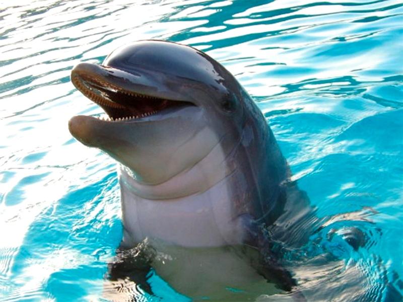 Неудачная погоня за дельфином на Херсонщине