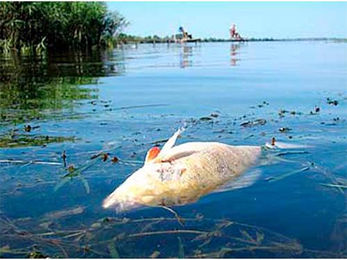 Точные причины мора рыбы на Херсонщине не установлены