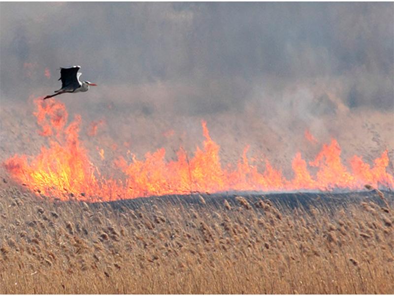 Заповедник на Херсонщине в кольце пожаров