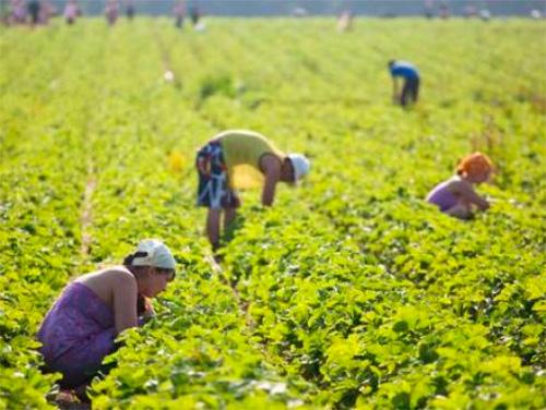 Сезонная работа все больше интересует херсонцев