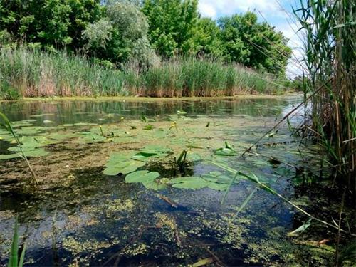 На заповідних землях Олешшя назріває екологічна катастрофа