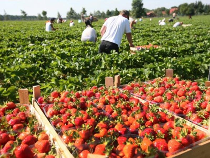 На Херсонщині знайшли сезонну роботу тисячі людей