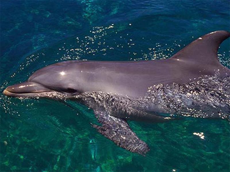 На Херсонщине спецназ под присмотром дельфинов
