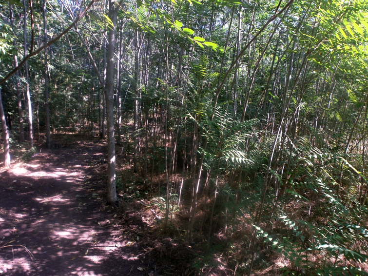 Ковыль, шёлковая акация и почти бамбуковый лес – какая красота растет в ботаническом саду Херсона