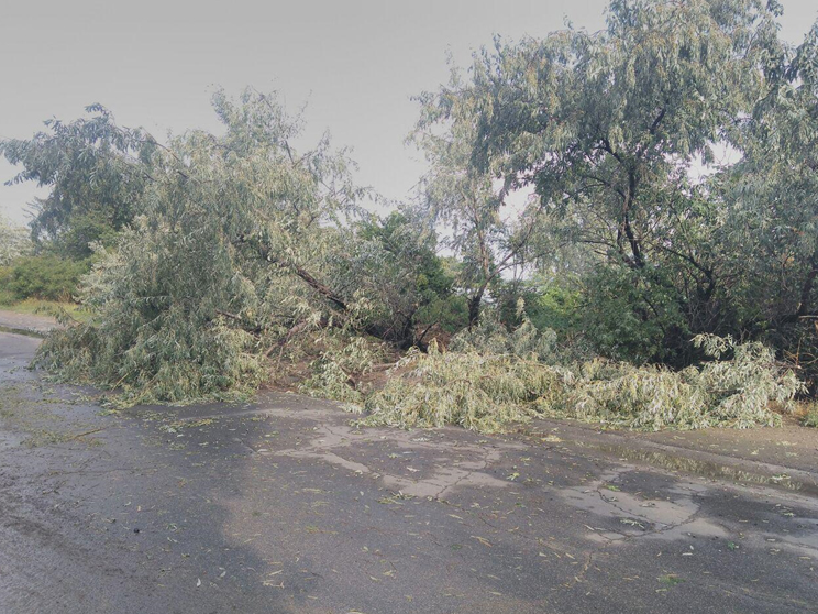 На Нефтегавани рухнувшее дерево перегородило проезжую часть