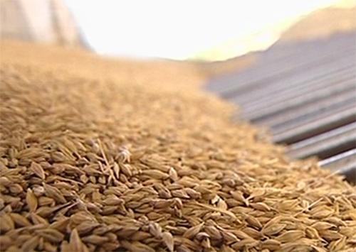 Рекордний врожай зернових зібрали на Херсонщині