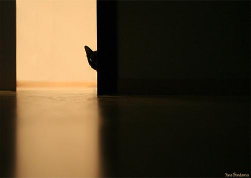 Черную кошку в темной комнате искали депутаты Херсонского горсовета
