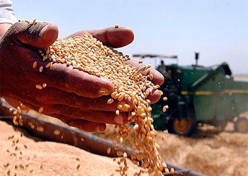 Урожай на Херсонщине за бесценок скупают предприимчивые дельцы