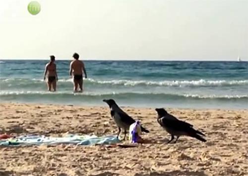 Пляжные воры орудуют на Херсонщине