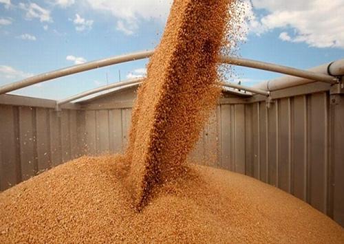 Урожай на Херсонщине наполняет бюджет