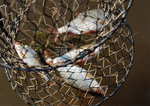 Двоє українців затримали за незаконний вилов риби на озері Сиваш