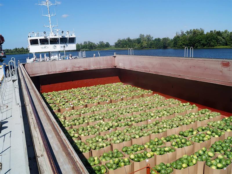 Пливуть Дніпром херсонські кавуни