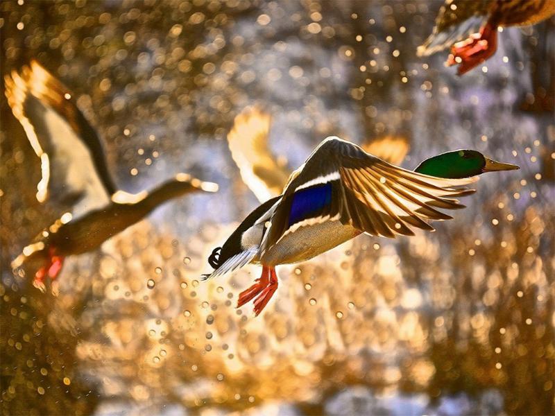 Начало сезона охоты на Херсонщине отложили из-за жары