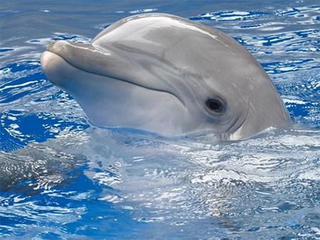 На Херсонщині завдяки небайдужим людям врятували дельфіна