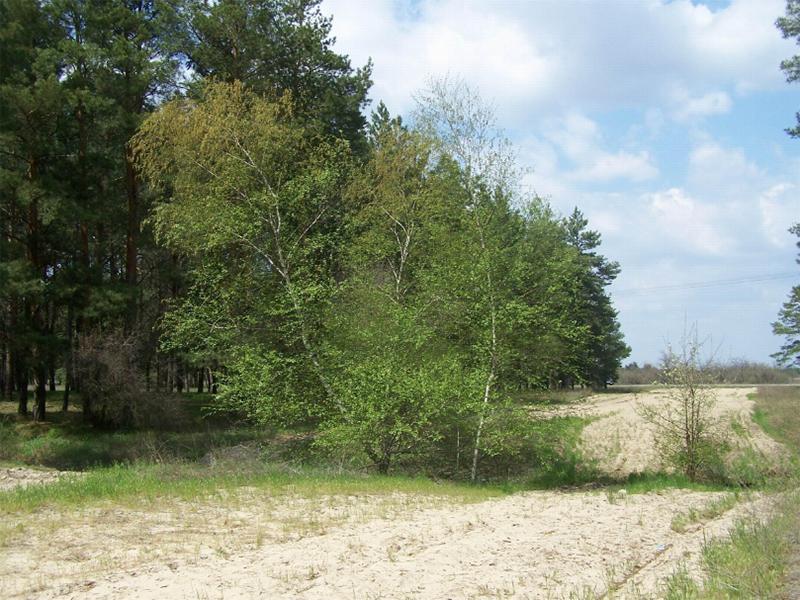 Херсонский лесхоз навынос