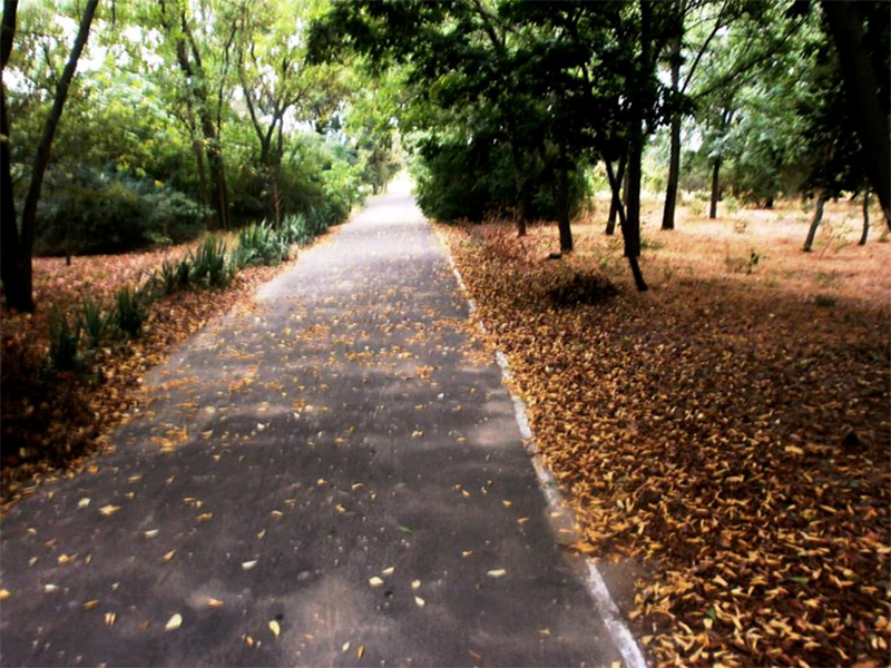 Херсонский ботанический сад: роскошь запустения
