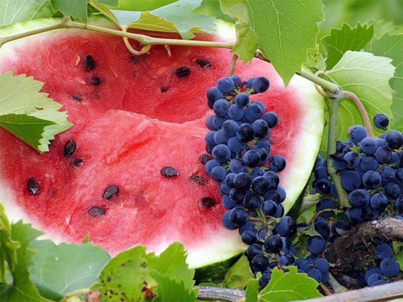На Херсонщині кавуни й виноград дешевшати не поспішають