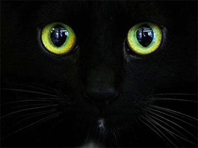 В Херсоне домашняя кошка обнаружила вора