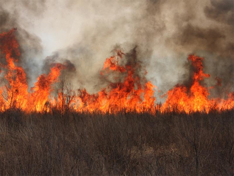 На Херсонщине поджигателя поля оштрафовали на 170 гривен
