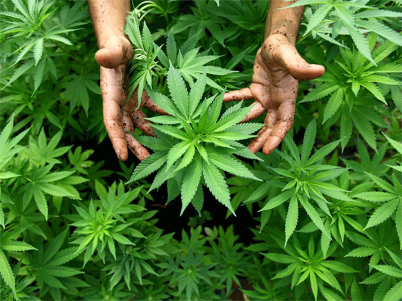 Трех распространителей наркотиков накрыли на Херсонщине
