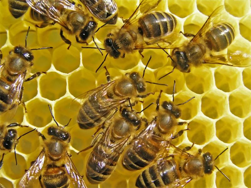 Пчеловодов Херсонщины так и не предупреждали о химобработке полей
